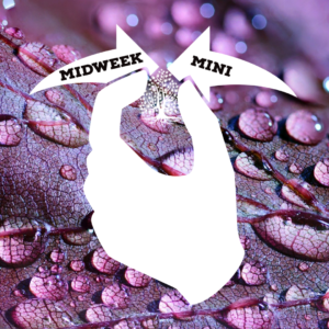 Midweek Mini Ep 5: Ohio's DSP Add On Incentive