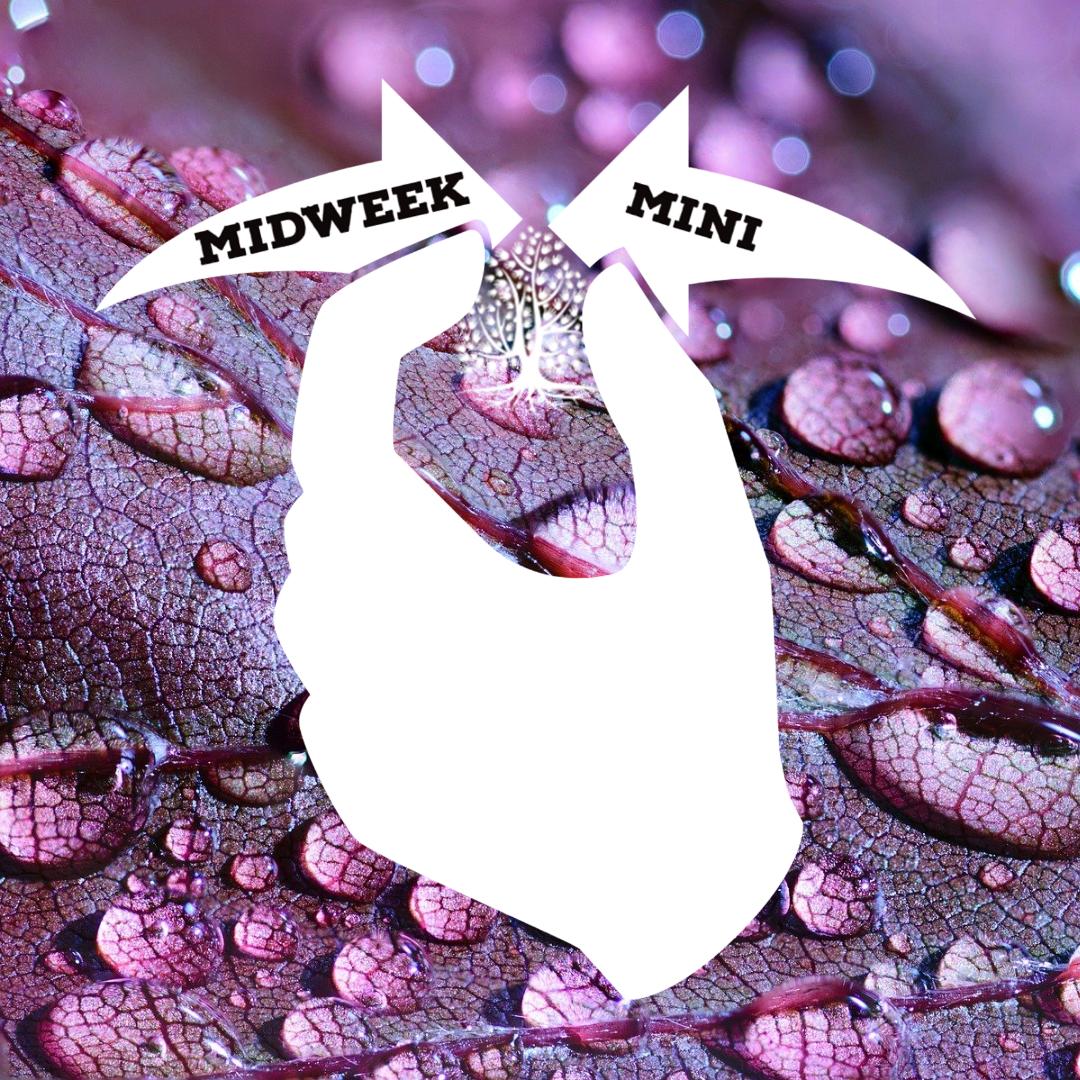 Midweek Mini Ep 9: Crip Camp